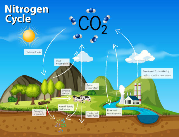 illustrazioni stock, clip art, cartoni animati e icone di tendenza di science nitrogen cycle co2 - azoto