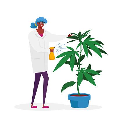 Scientist Character Care of Hemp Plant. Alternative Herbal Medicine, Medical Cannabis Research, Marijuana Producing