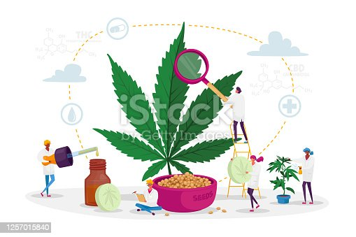 Scientist Characters Growing Medical Cannabis and Preparing Homeopathic Medicine of Marijuana. Cannabis Recipe for Personal Use, Legal Light Drugs Prescribe Concept. Cartoon People Vector Illustration