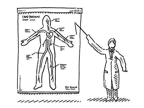 Scientist Explaining Human Blood Circuit Drawing