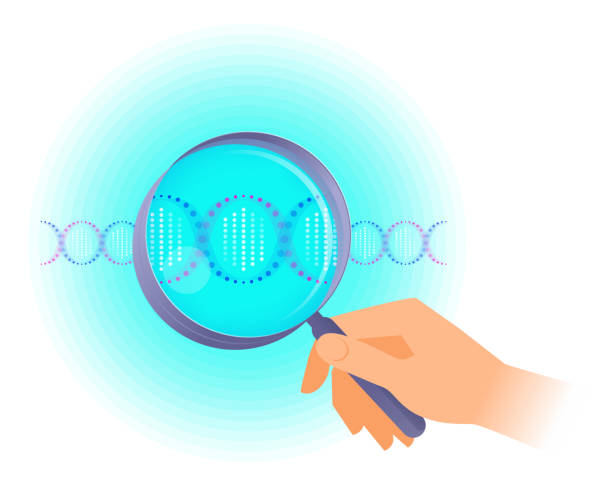A scientist holds a magnifier and researches DNA helix. A scientist holds a magnifier and researches DNA helix. Flat vector illustration of human hand holding a magnifying glass and DNA spiral. Science, medical, genetics, laboratory and forensic concept. genomics stock illustrations