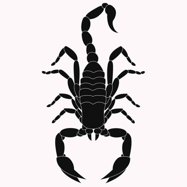 Scorpion vector icon. The symbol of November Scorpion vector icon. The symbol of November scorpio stock illustrations