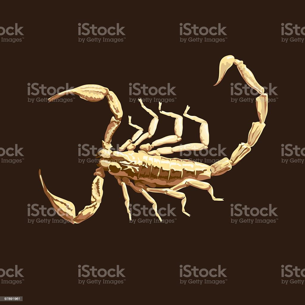 Scorpion royalty-free scorpion stock vector art & more images of abstract