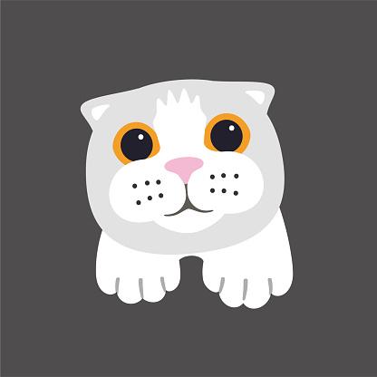 Scottish Fold cat face flat icon design, vector illustration