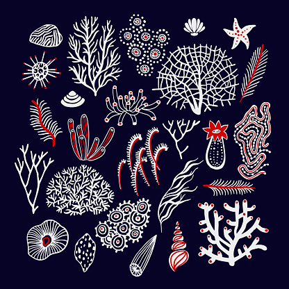 Sea and ocean set with seashells, corals, alga and starfishes. Marine collection background.