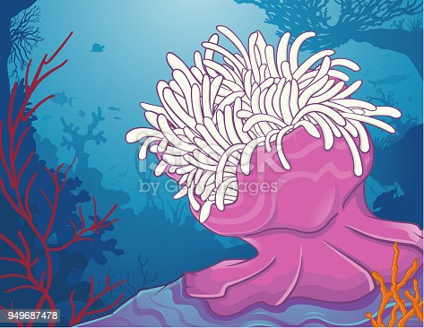 Sea anemone and various corals. Anémone de mer et diverses coraux.