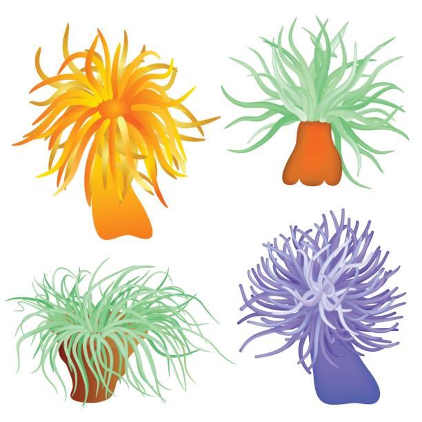 Sea anemones vector art illustration