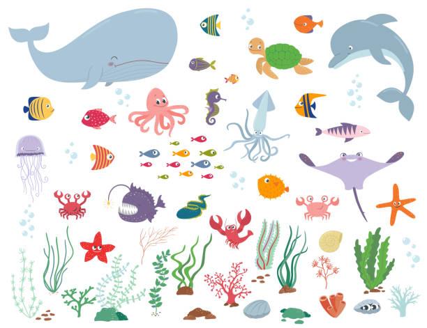 바다 동물 고 물 식물입니다. 만화 벡터 일러스트 레이 션 - 불가사리류 stock illustrations