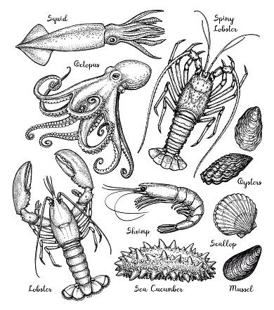 Meeres Tiere Großen Satz Stock Vektor Art und mehr Bilder von Auster