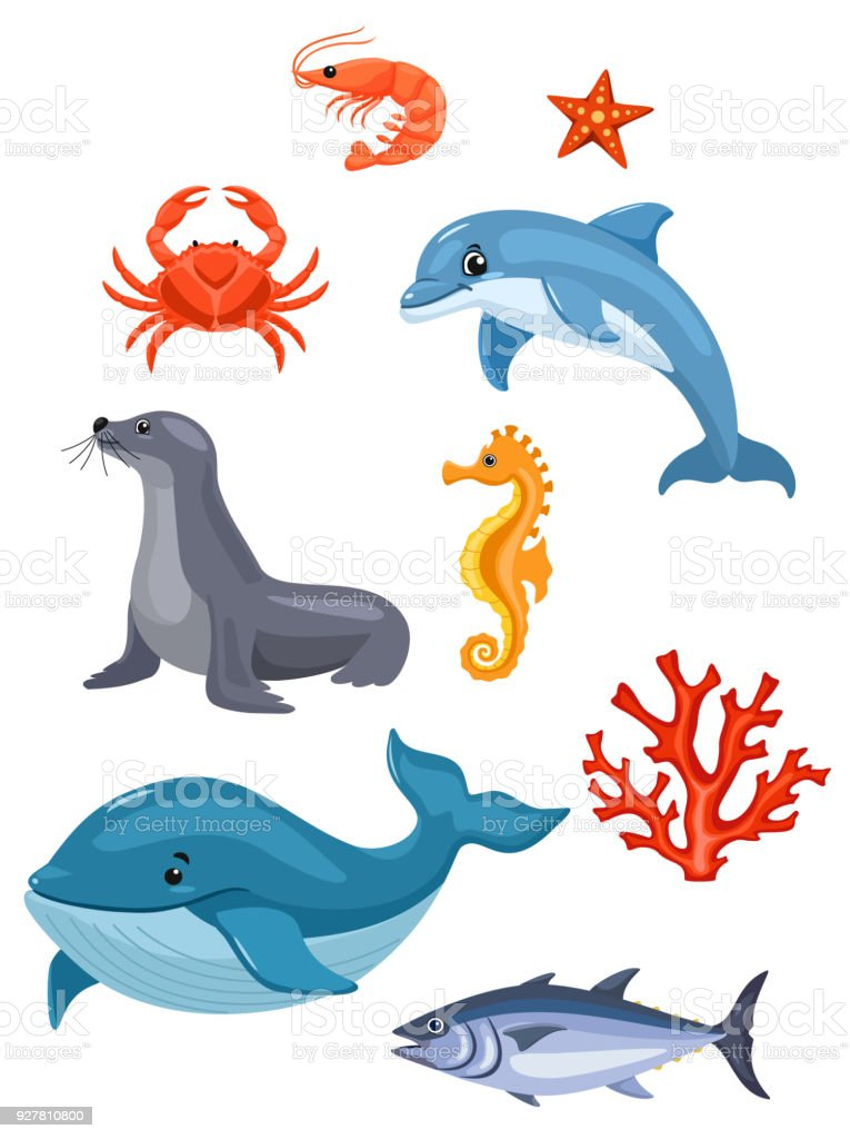 Sea animals isolated on white background. Vector illustration.
