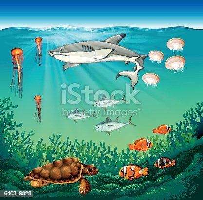 meer tiere schwimmen unter wasser stock vektor art und mehr bilder von bildhintergrund 640319828