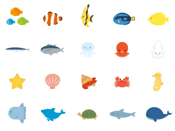 Sea animals1 vector art illustration
