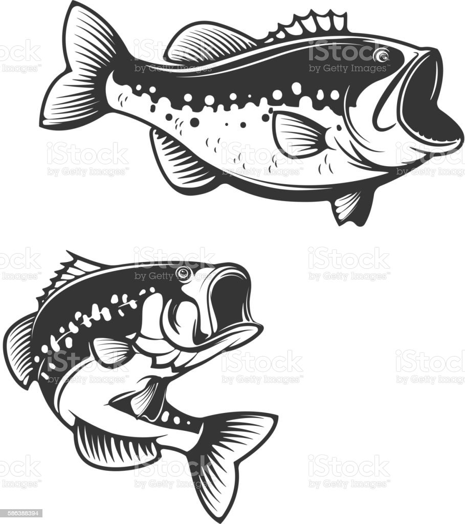Sea bass fish silhouettes isolated on white background. vector art illustration