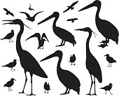 Sea Birds, Pelican, Seagulls