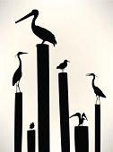 Sea Birds - Seagull, Pelican, Crane