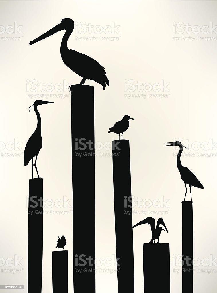 Sea Birds - Seagull, Pelican, Crane vector art illustration