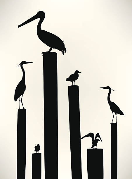 Best Pelican Illustrations, Royalty-Free Vector Graphics ...