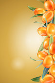 Sea buckthorn. The concept of realistic image of plants and berry. Natural ingredient element, golden background 3d illustration