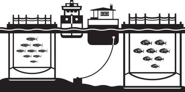 ilustrações de stock, clip art, desenhos animados e ícones de sea cage fish farming - aquacultura