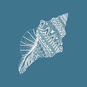 Sea cockleshell. Hand Drawn aquatic doodle ve