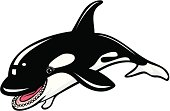 vector illustration of a smiling orca, see the rest of the series