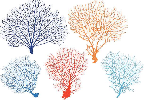 sea fan corals, vector detailed black sea fan corals, vector set coral colored stock illustrations