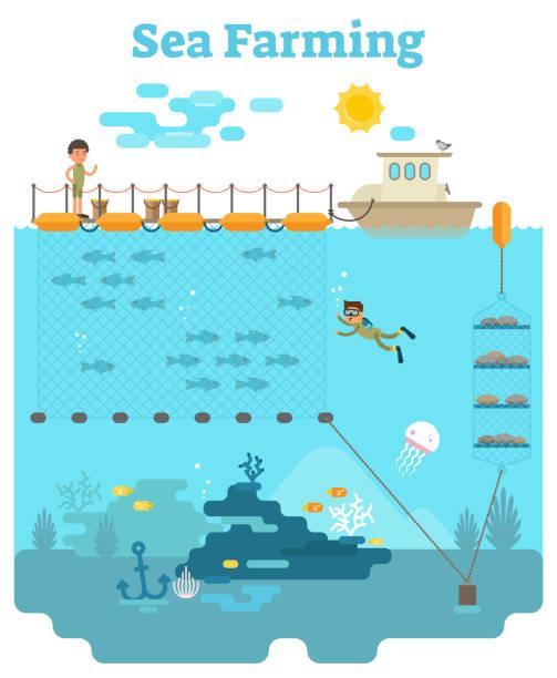 ilustrações de stock, clip art, desenhos animados e ícones de sea farming illustration - aquacultura