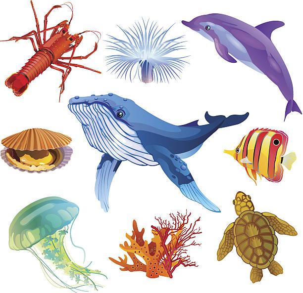 sea fauna - marine life stock illustrations