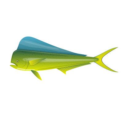 Sea fish. Beautiful, colorful ocean fish Dorado Mahi-Mahi