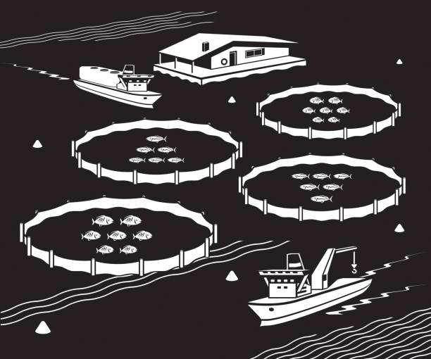 ilustrações de stock, clip art, desenhos animados e ícones de sea fish farm - aquacultura