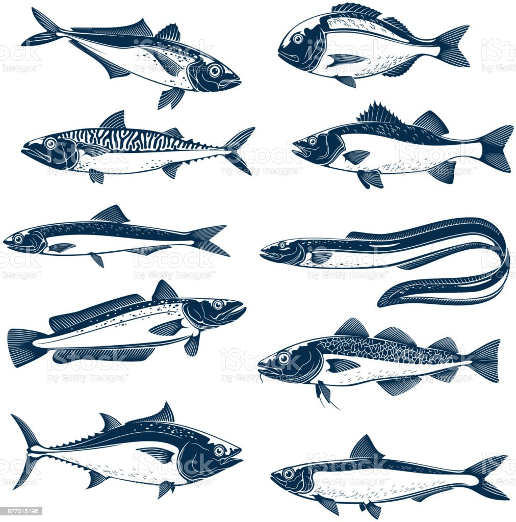 Sea fish icon set for seafood and fishing design vector art illustration