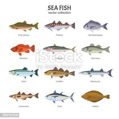 Vector illustration of different types of saltwater fish, such as Pink salmon, Pollock, Gilt-head bream, Rockfish, Mackerel, Sea bass, Keta, Codfish. Isolated on white.