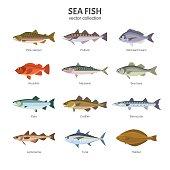Sea fish vector collection.
