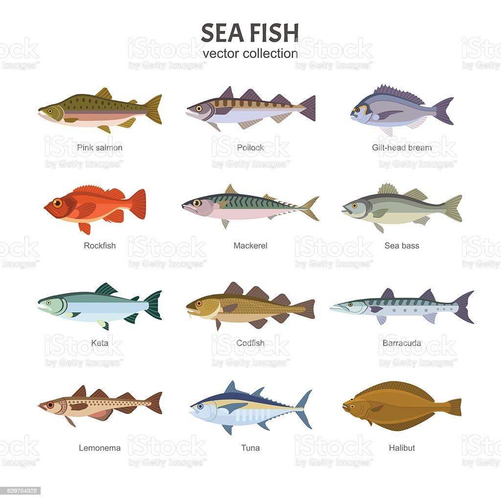 Sea fish vector collection. векторная иллюстрация