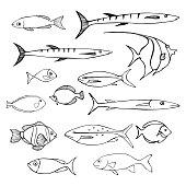 Sea fish. Vector sketch  illustration.