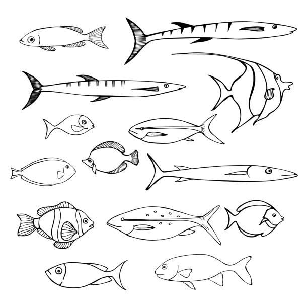 Sea fish. Vector sketch  illustration. Sea fish. Vector sketch  illustration. blue silhouettes stock illustrations