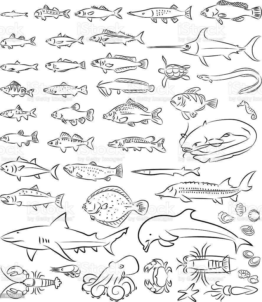 sea fishes and creatures vector art illustration