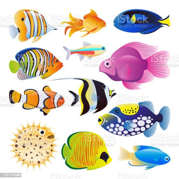 Tropical Fish Vector Art Graphics Freevector Com