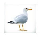 Sea gull, vector icon