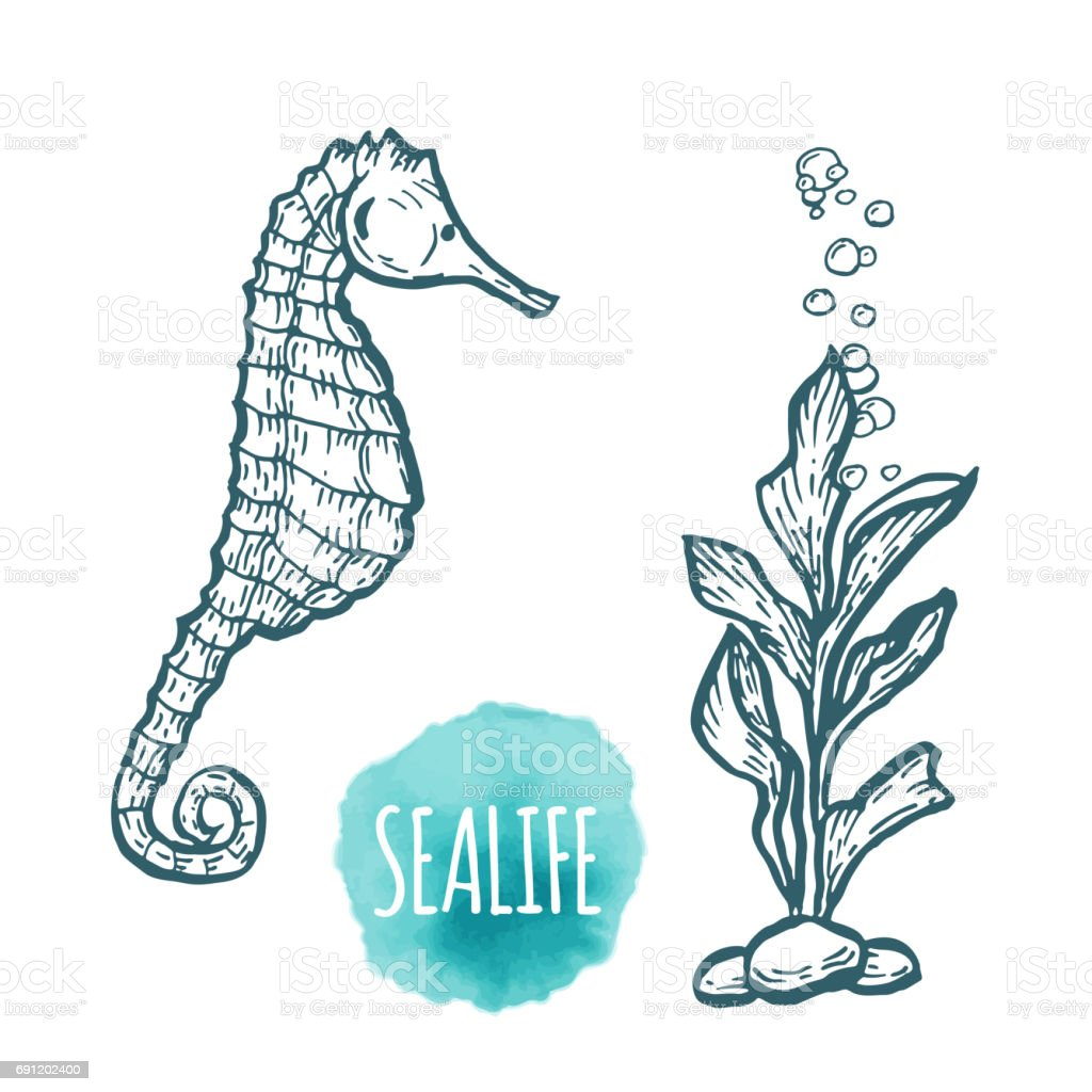 Sea Horse Drawing On White Background Hand Drawn Seafood Illustration Stock Illustration Download Image Now Istock