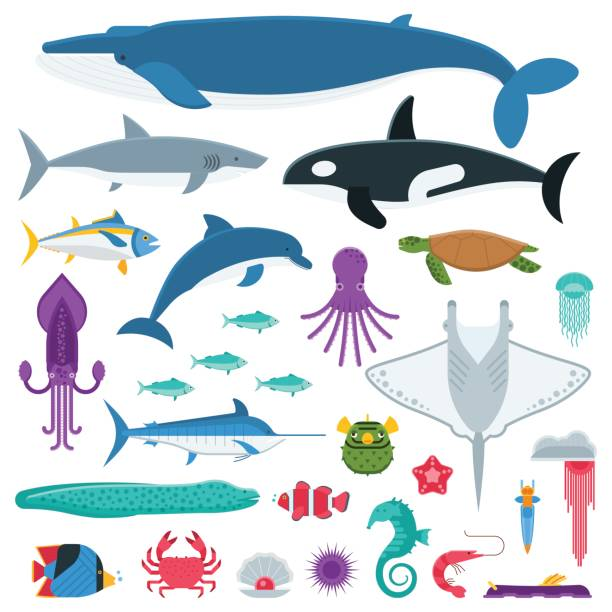 Sea Life and Underwater Animals and Fishes Underwater animals and sea creatures in cartoon style. Ocean and marine fishes and other aquatic life collection. Vector illustration of blue whale, devilfish, dolphin, orca, octopus, mollusks. marine life stock illustrations