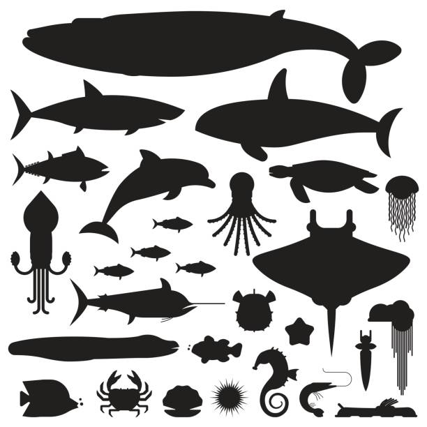 Sea Life and Underwater Animals Icons Underwater animals and sea creatures label templates. Ocean and marine fishes and other aquatic life silhouette collection. Blue whale, devilfish, dolphin, orca, octopus, mollusks icons. marine life stock illustrations