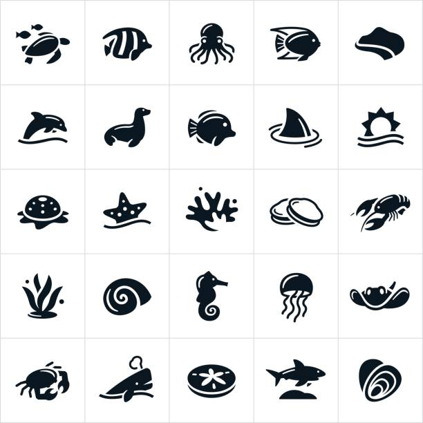 sea life icons - seashell stock illustrations, clip art, cartoons, & icons