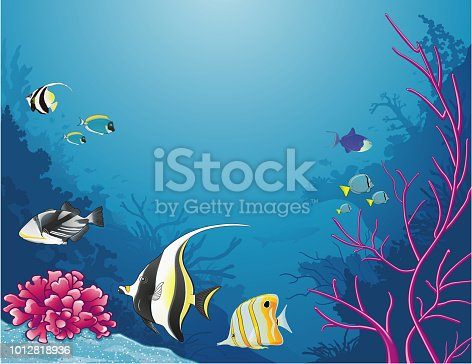 Sea life with tropical fishes and bright colored corals. La vie sous la mer avec des poissons tropicaux et de jolies coraux aux couleurs vives.