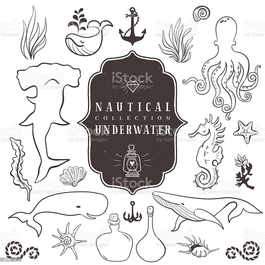 Sea life, marine animals. Vintage hand drawn elements vector art illustration