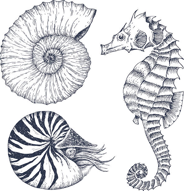 Sea life set Image with nice hand drawn graphic marine animals nautilus shell stock illustrations