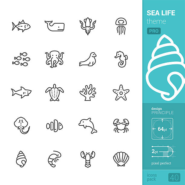 sea life theme, outline vector icons - pro pack - seashell stock illustrations, clip art, cartoons, & icons