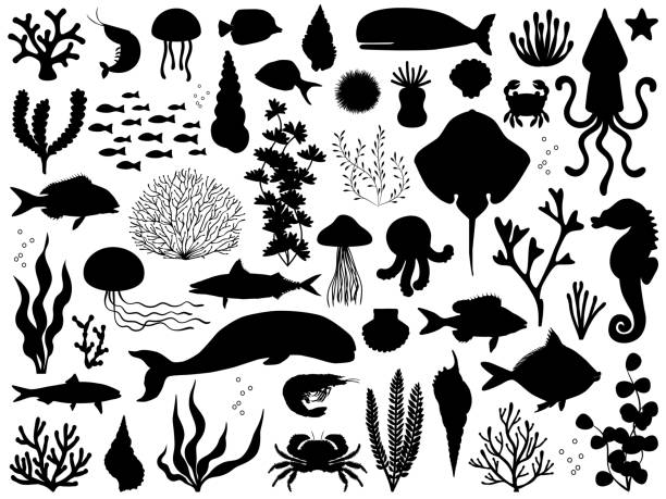 Sea life vector silhouette iset Icon vector illustration marine life stock illustrations