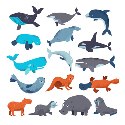 Sea mammal vector water animal character dolphin walrus and whale in sealife or ocean illustration marine set of seal or hippo illustration set isolated on white background