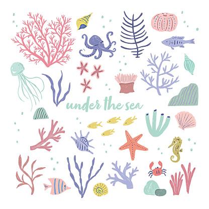 sea ocean animal summer  illustration